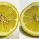 2つのレモンどちらかが絵 両方とも本物にしか見えないと話題に