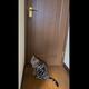 脱出を企む子猫…ドアノブに向かって必死のジャンプを繰り返し、頭を使って脱出成功!