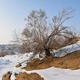 グルバンテュンギュト砂漠に広がる雪景色 新疆ウイグル自治区