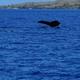 商業捕鯨が31年ぶりに再開、なぜ今クジラを捕るの?