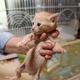 保護された野良猫の子猫。かつて殺処分されていた犬猫の大半はこうした子猫が占めていた=大和高田市で2020年5月20日午後1時34分、稲生陽撮影