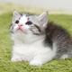 """""""目が合う=両想い""""は勘違い! 猫に嫌われないための飼い主の心得"""